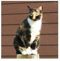 Image of Farrah the Cat.