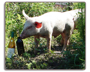 Image of Wine with a Swine Event.