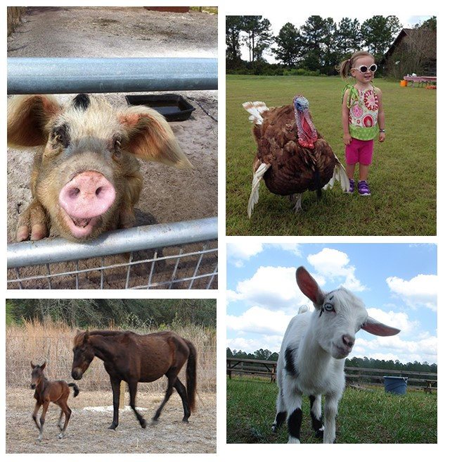 Image of assorted residents from farm.