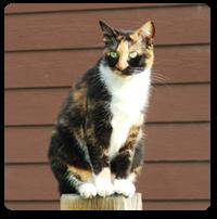 Image of Farrah.